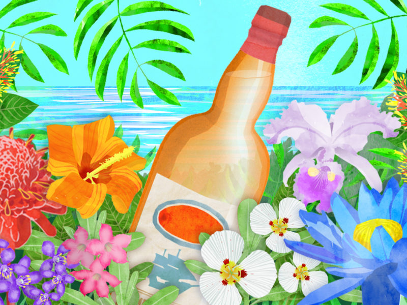 Rum in the jungle, illustration by Maria Burns.