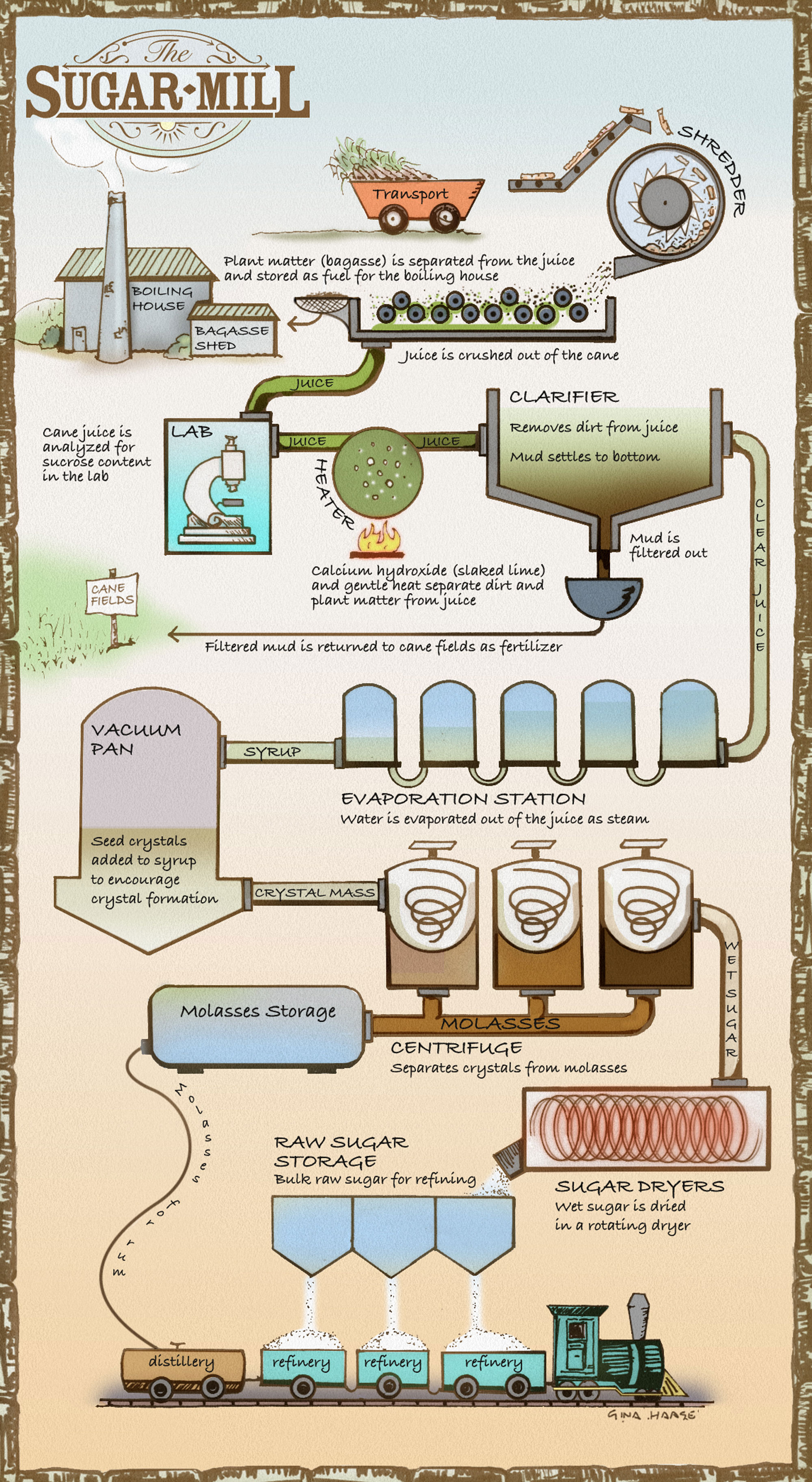 The process of milling sugar. Illustration by Gina Haase.